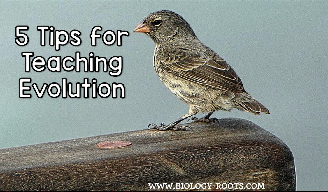 5 Tips for Teaching Evolution